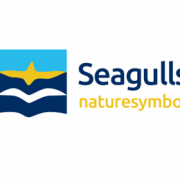 Seagulls-02